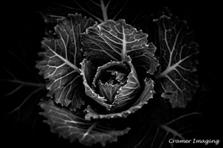 Cramer Imaging's professional quality nature photograph of a low key black and white ornamental lettuce head plant at Freeman Park, Idaho Falls, Bonneville, Idaho