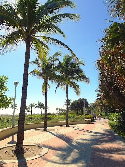 cykla i Miami Beach