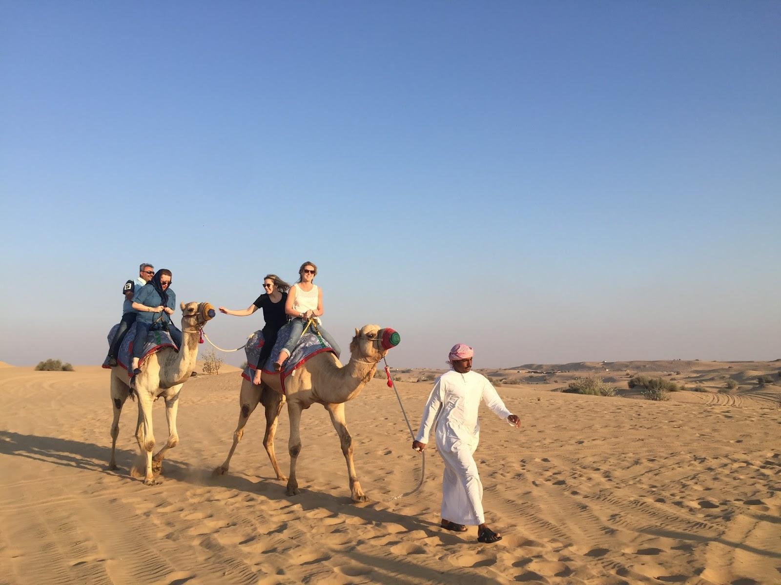 camelos-em-dubai