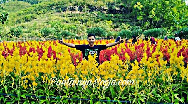 taman bunga gunungkidul