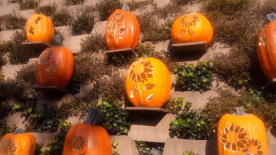 wall of pumpkins dollywood
