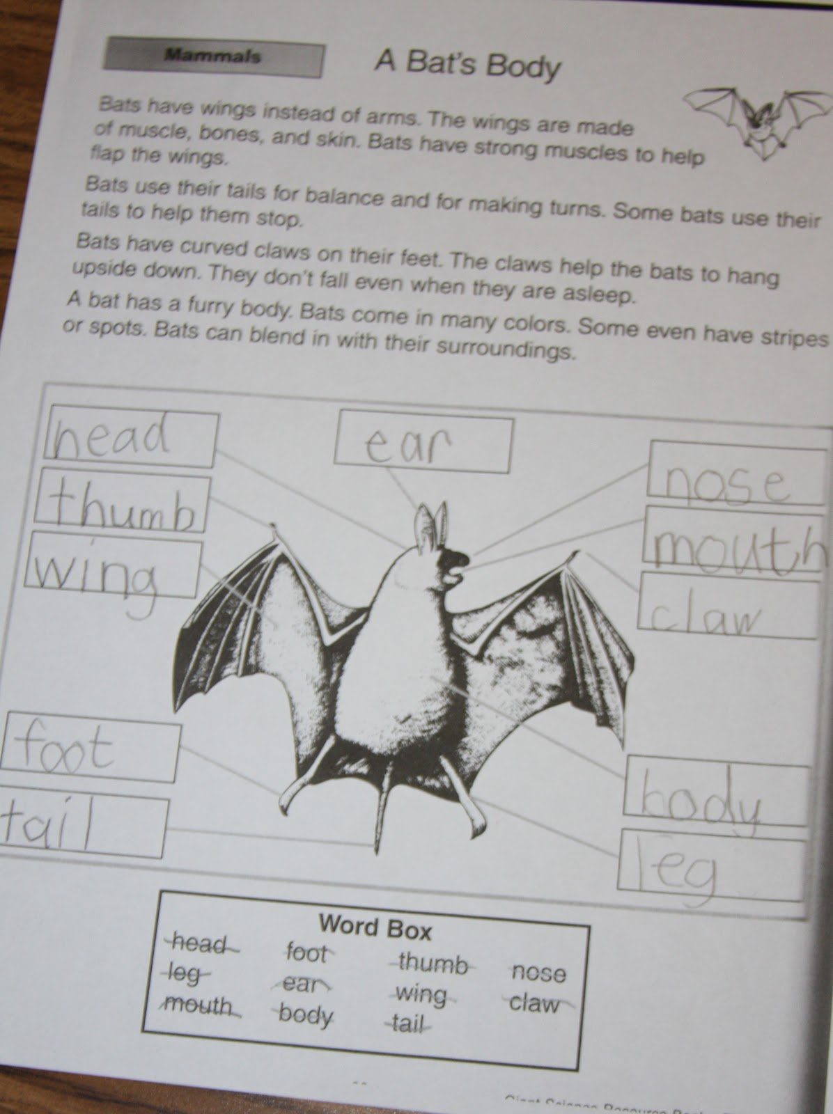 A Learning Journey Bat Unit Anatomy