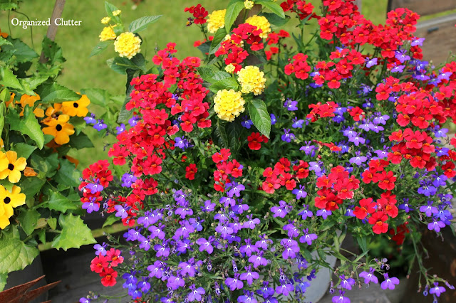 Nemesia, lantana, and lobelia in galvanized bucket www.organizedclutter.net
