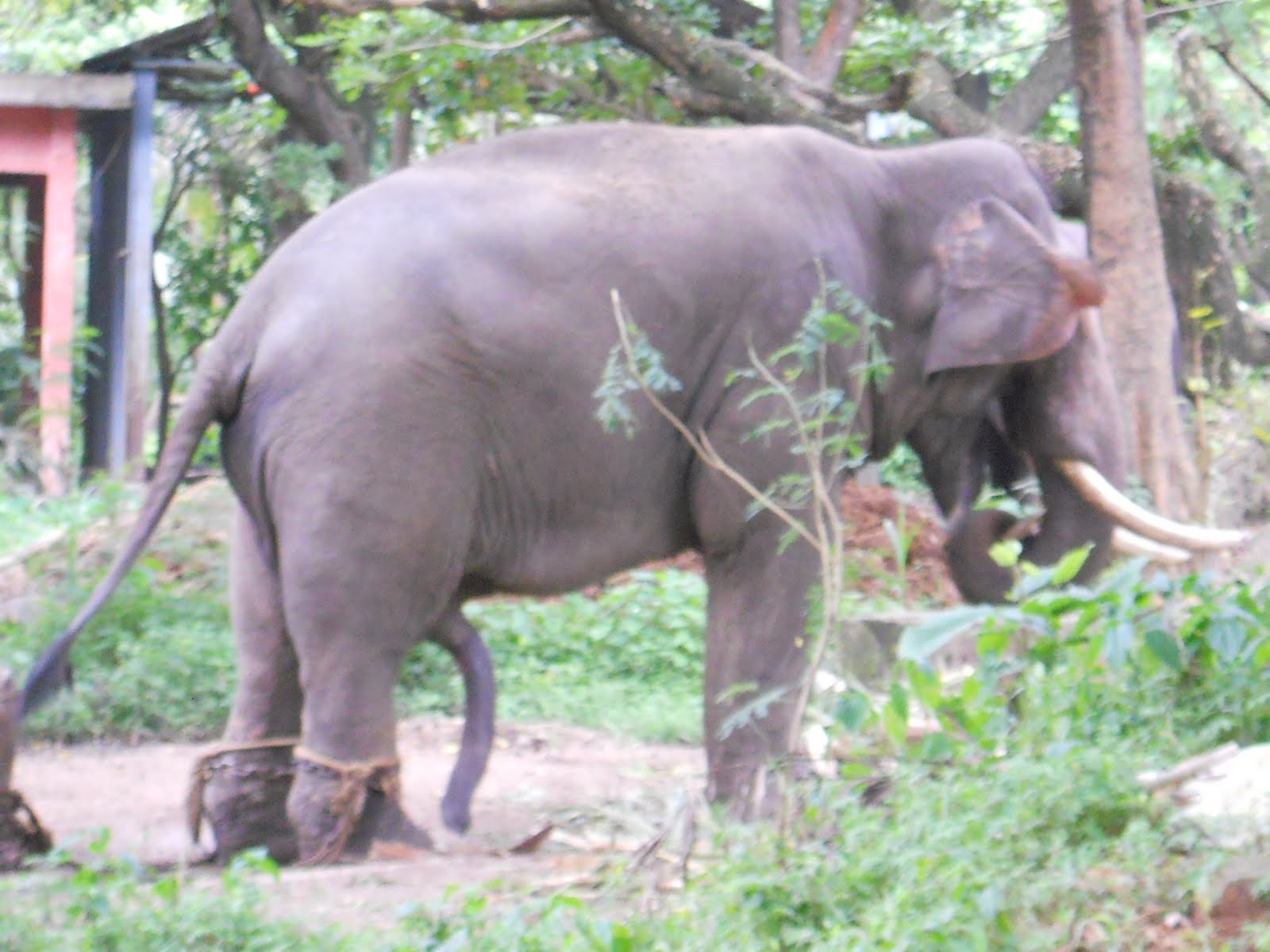 wallpapers name: Elephants in kerala