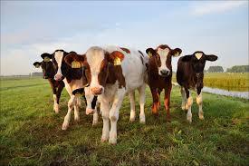 bisnis rumahan ternak