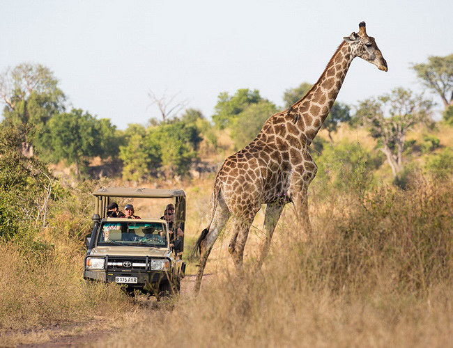 Xvlor Kafue National Park is conservation of 22,400 sq kilometers in Zambia