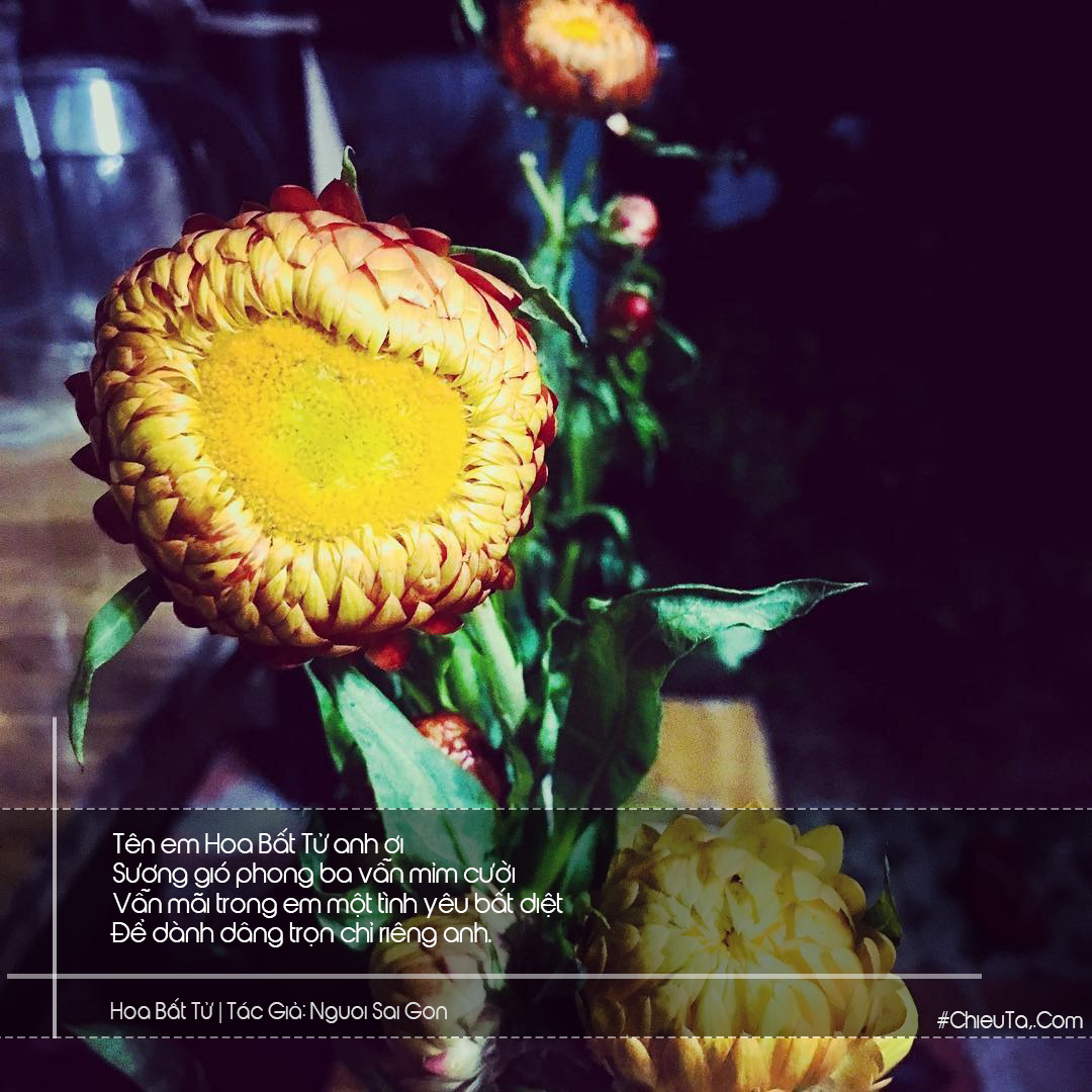 Thơ Hoa Bất Tử - Tuyển Tập 15 Bài Thơ \u0026 Câu Thơ Về Loài Hoa