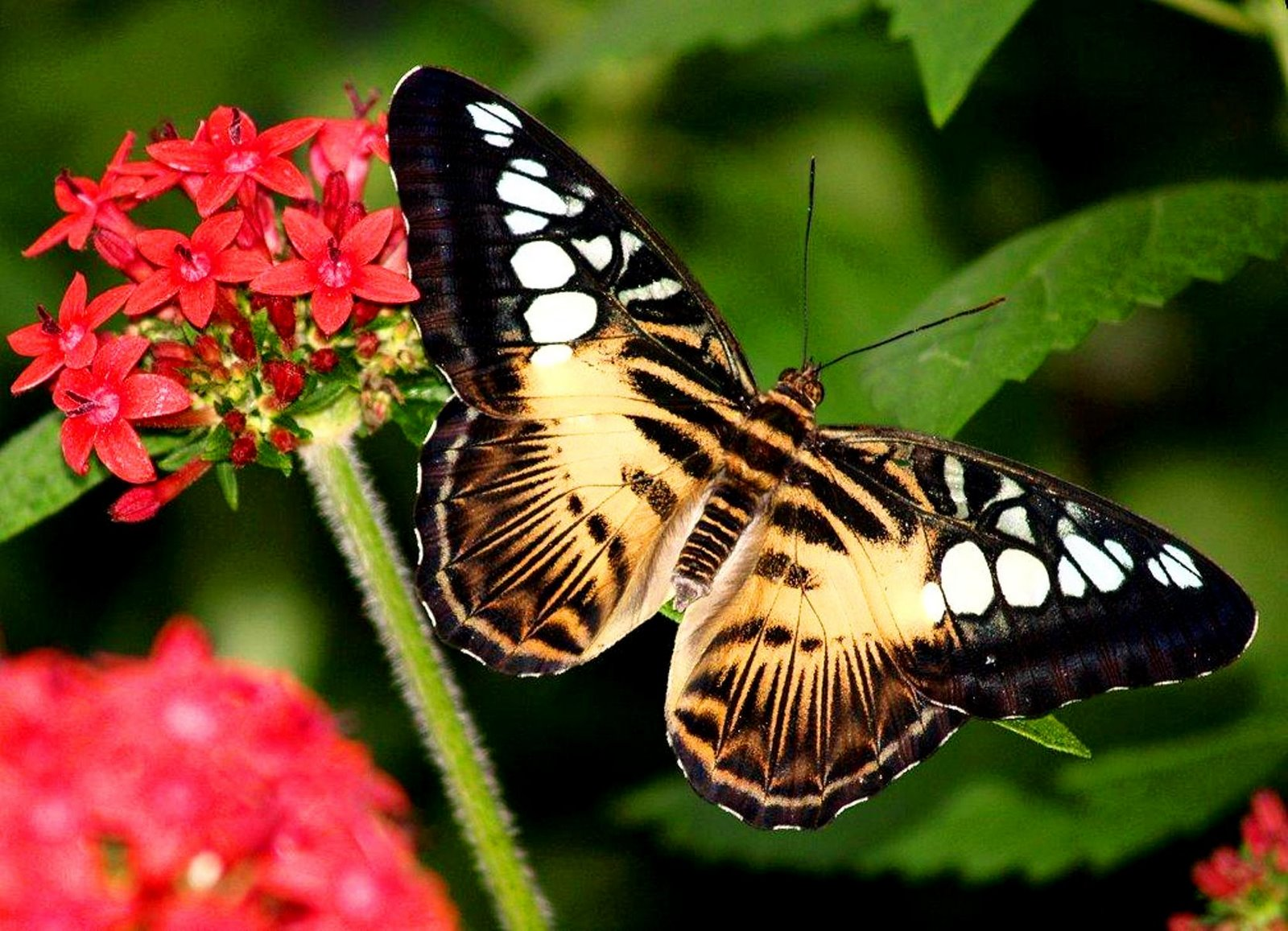 Little Girl With Flowers Hd Wallpaper Butterfly Wallpapers Latest Updates About Technology