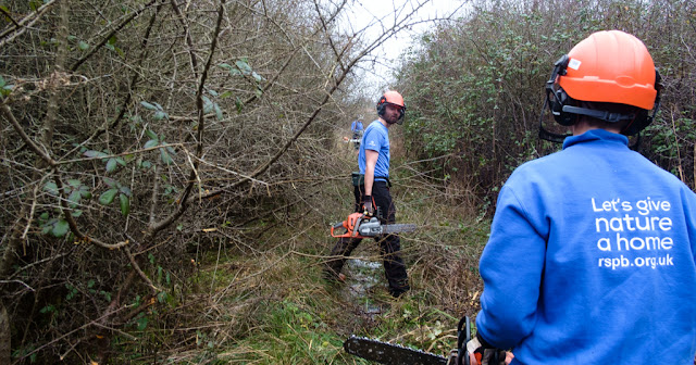 Voluntary work with the RSPB