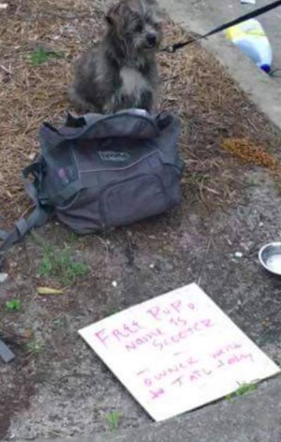 Dog Tied To A Pole With A Heartless Note