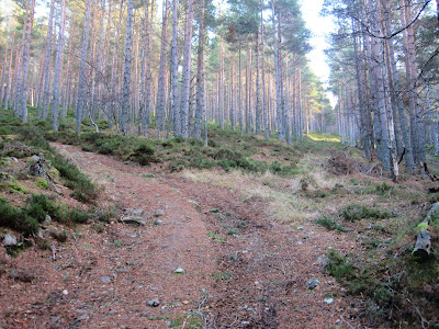Deeside walks: ascend Pannanich Hill near Ballater