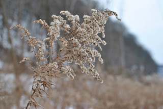 a plant still growing in winter