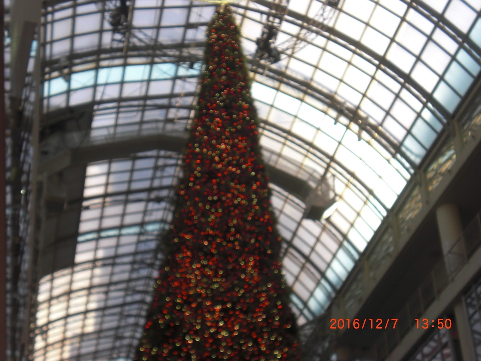 Kayo Kyoku Plus: TUBE -- Christmas Rose (クリスマスローズ)