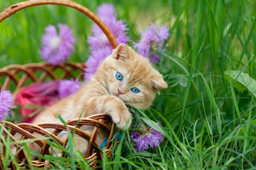 Cat Picture with Flowers