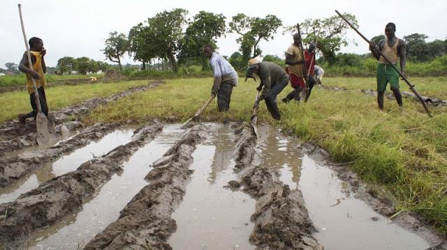 Lançado projeto para dar emprego a 2,5 mil jovens guineenses na agricultura