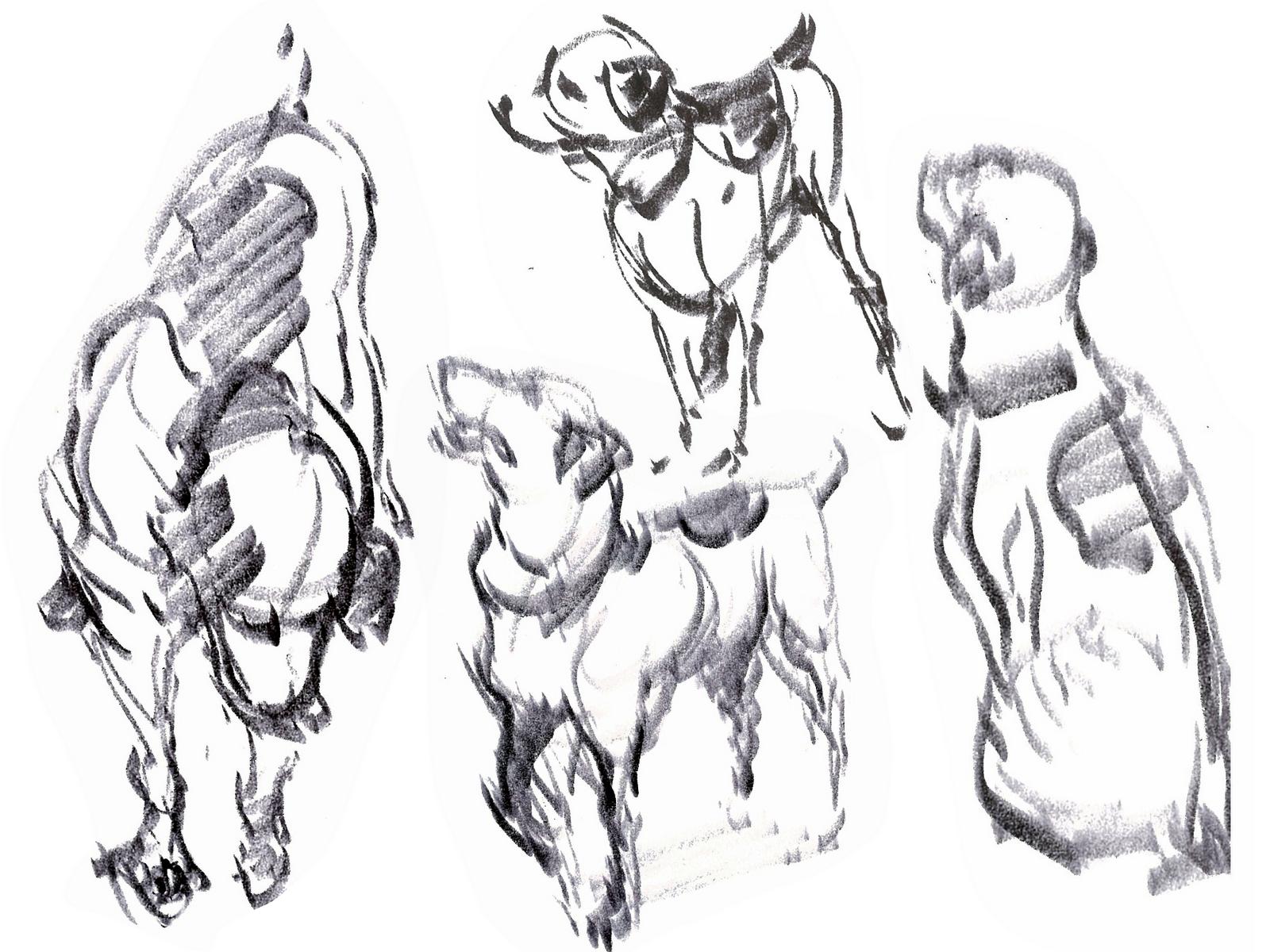 the Art of Janine Antolin: Animal Life Drawing with Joe