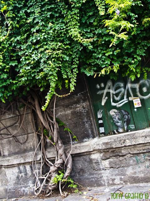 Il glicine storico di via Ferrante Aporti e l'omino in prigione che appare da dietro le sbarre di un magazzino abbandonato.   Chi l'ha dimenticato lì?