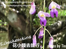 2020日本紫藤開花情報