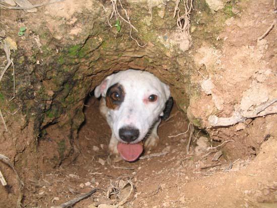 Lý do chó thích đào bới