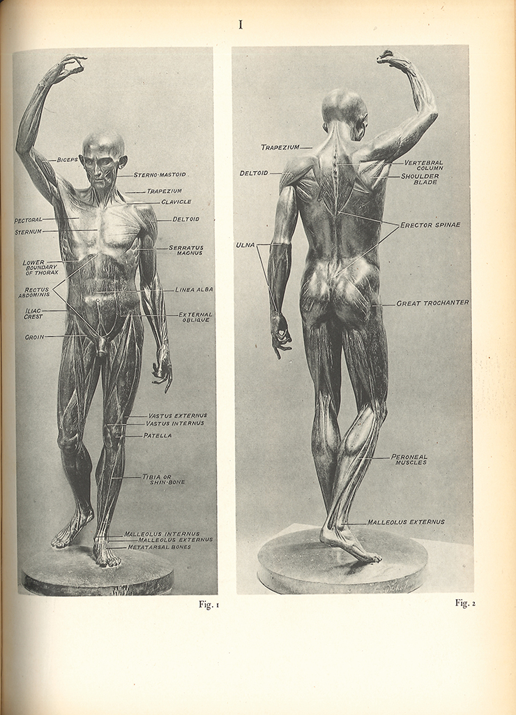 Research of Artistic Anatomy: ...