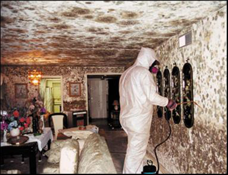 Black Mold Removal Columbus