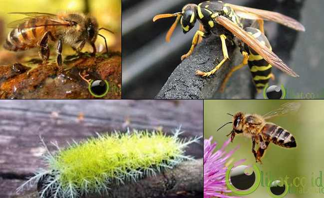10 Jenis Serangga yang Memiliki Racun paling Mematikan