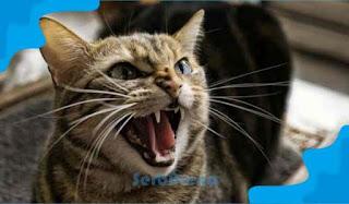 Arti Mimpi Kucing Marah Menurut Primbon Jawa
