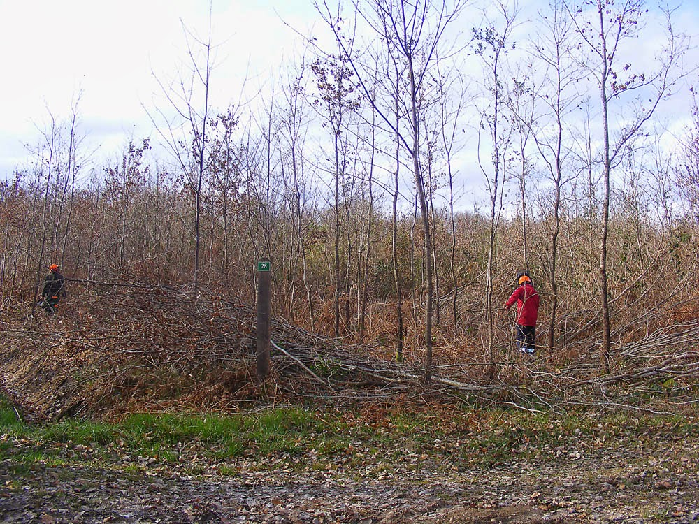 Foresters thinning naturally regenerated forest managed for timber production.  Indre et Loire, France. Photographed by Susan Walter. Tour the Loire Valley with a classic car and a private guide.