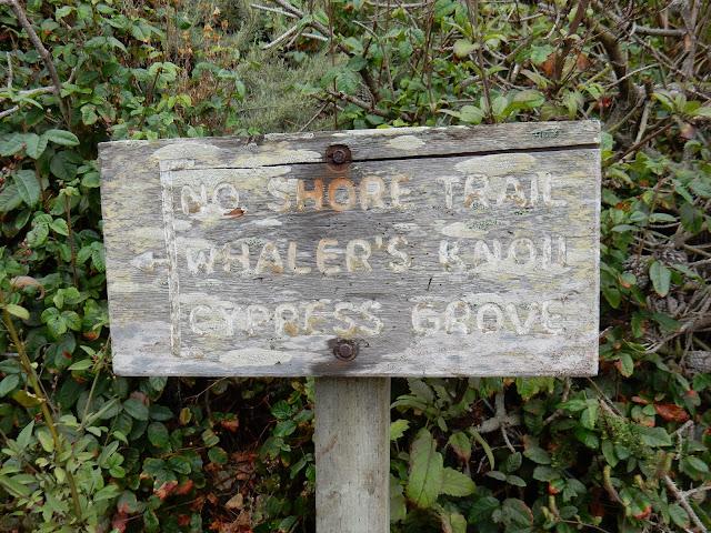 Point Lobos, California, Elisa N, Blog de Viajes, Lifestyle, Travel