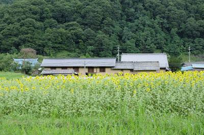 工芸と喫茶ひとつ石の裏のひまわり畑 向日葵と土蔵