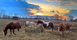 Horsexplore, El Bronco