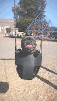 Alimenter un chien insuffisant rénal