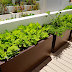 Uses And Decoration Of Vegetable Planter Boxes