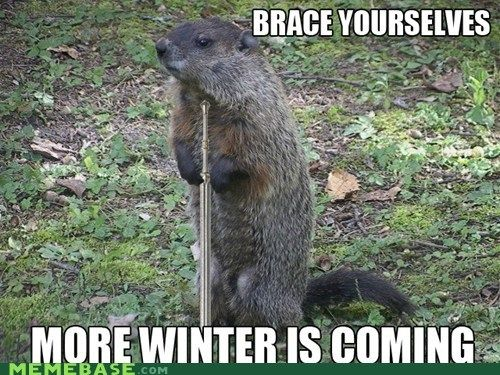 Click for more  Groundhog Day funnies! - Ground hog day sillies -- #FridayFrivolity funny memes via Devastate Boredom