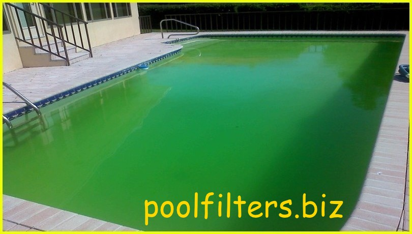 Swimming Teaching: How to Clean a Green Swimming Pool?