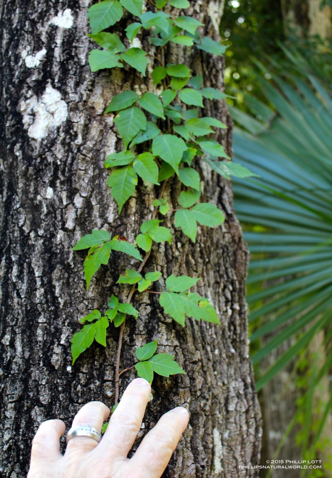 Phillip S Natural World Florida S 4 Common Poisonous Plants,Horse Lifespan