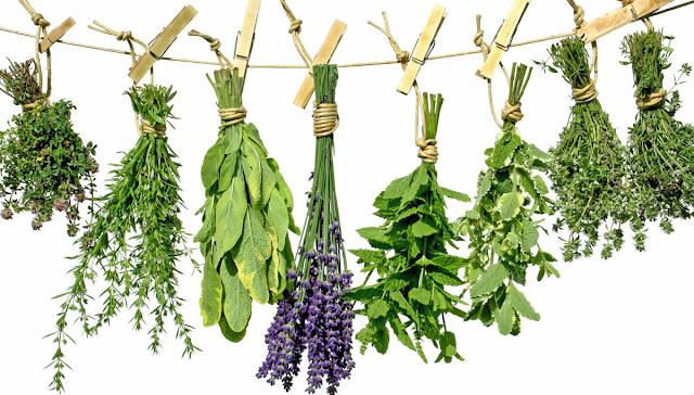 ¿Se siente estresado? ¡Estas 7 hierbas asombrosas te regresarán al camino!