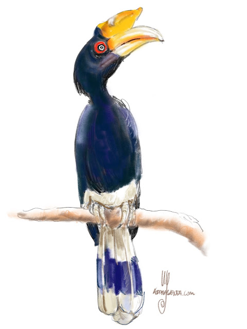 Rhinoceros hornbill Bird painting by Ulf Artmagenta