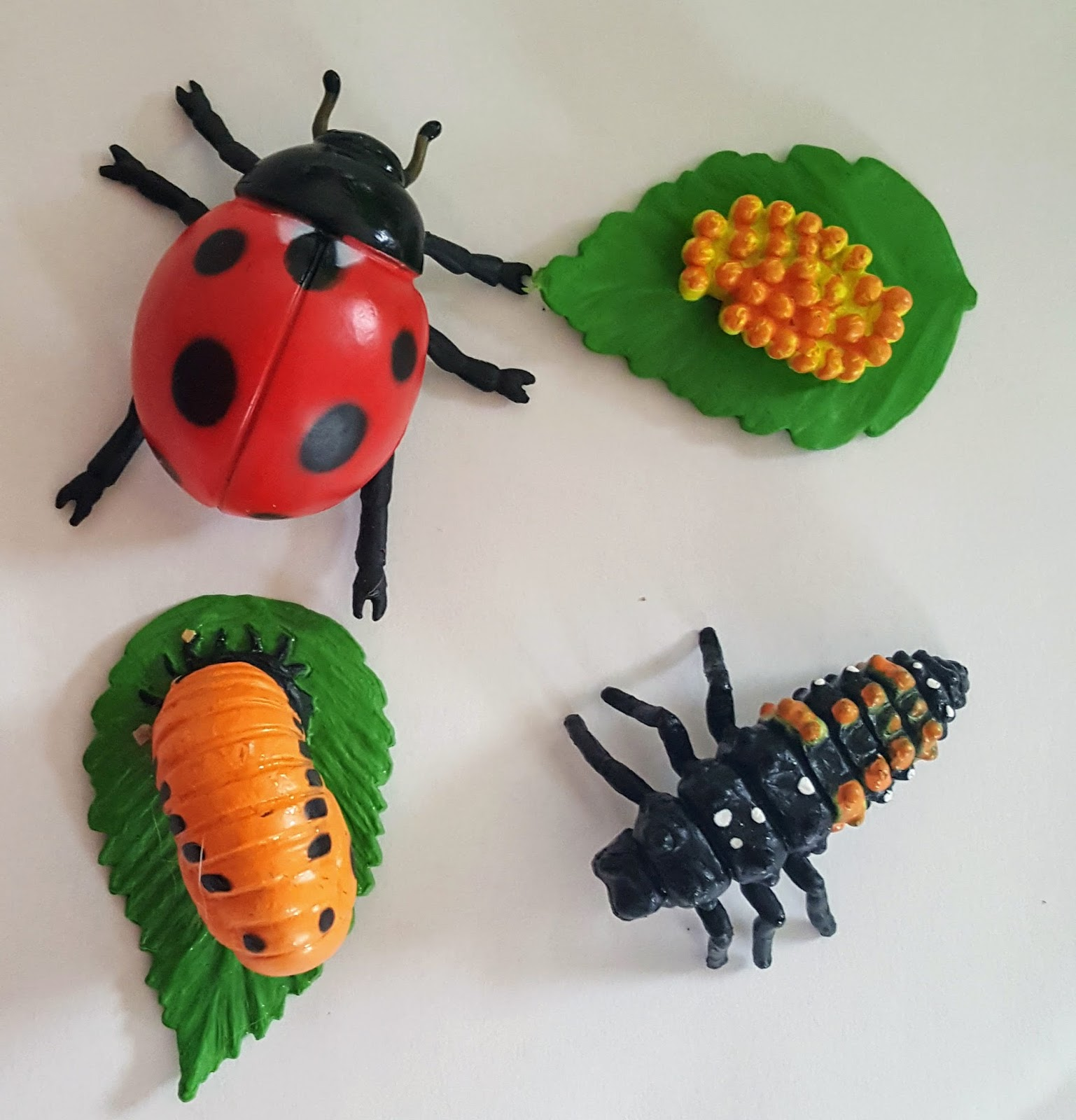 6 Activities To Learn About Ladybugs Swell Mommy