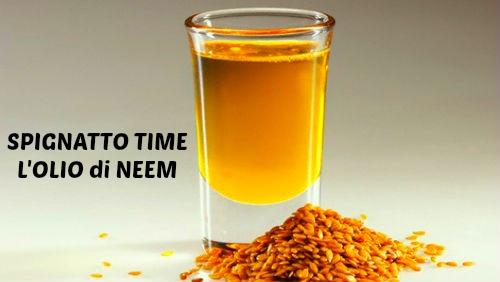 olio di neem, olio di neem applicazioni cosmetiche, olio di neem proprietà cosmetiche