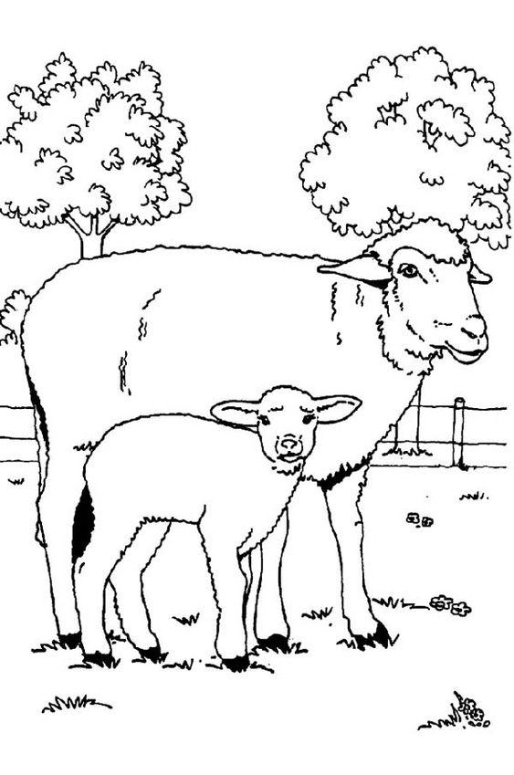 Tranh tô màu hai mẹ con cừu