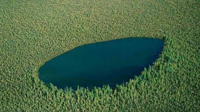 Gambar Forest Lake, Rusia