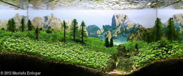 karya seni aquascape yang cantik menarik dan juga menakjubkan