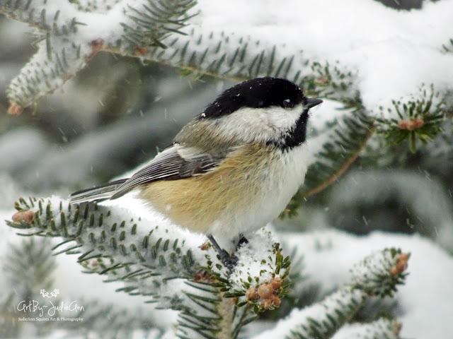 Cute bird in winter