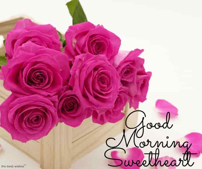good morning sweetheart roses