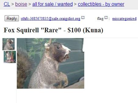 Capybara For Sale Craigslist