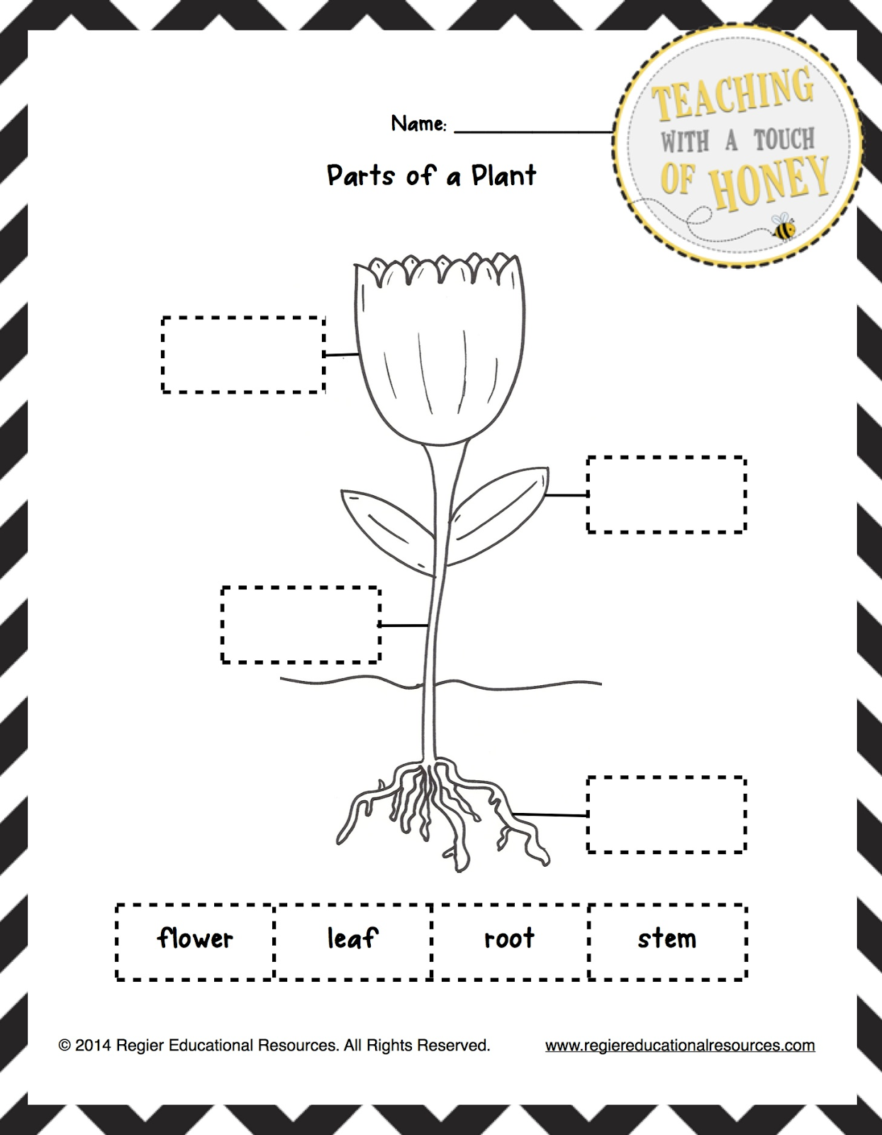 Parts Of A Plant Worksheet For Preschool