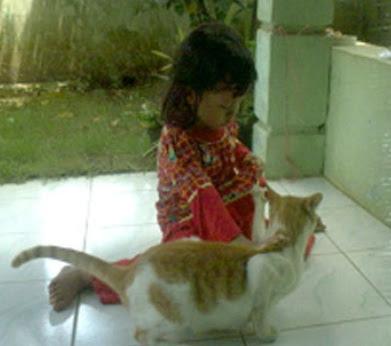 Beldo Kucing