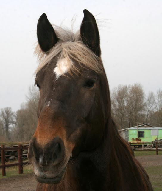 Фото Виталия Бабенко: лошадь