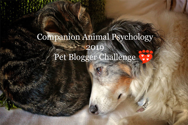 A dog and cat snuggle. Text reads Companion Animal Psychology Pet Blogger Challenge